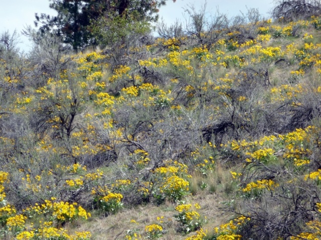 Okanagan spring flora